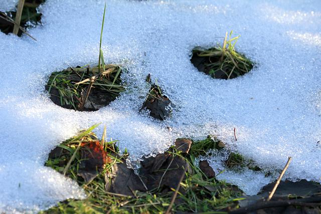 Fin de neige.... ;-)