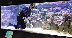 Nettoyons l'aquarium