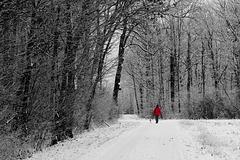 Winterwald - Winter forest - 2016