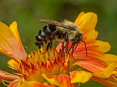 B030522dL Bee