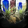 """""""Air"""" Plants"""