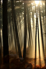 j' aime ce melange soleil / brouillard .....