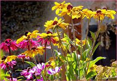 Sauze d'Oulx : fiori a 1600 mt. - (704)