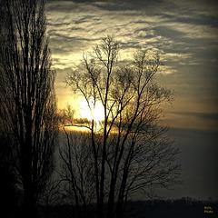 Coucher....,  dans les arbres....