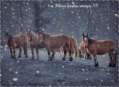 Vamos para casa,que ya se acerca la Navidad.!!!!!