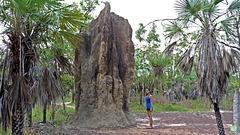 Miracle d'ingénierie des Termites