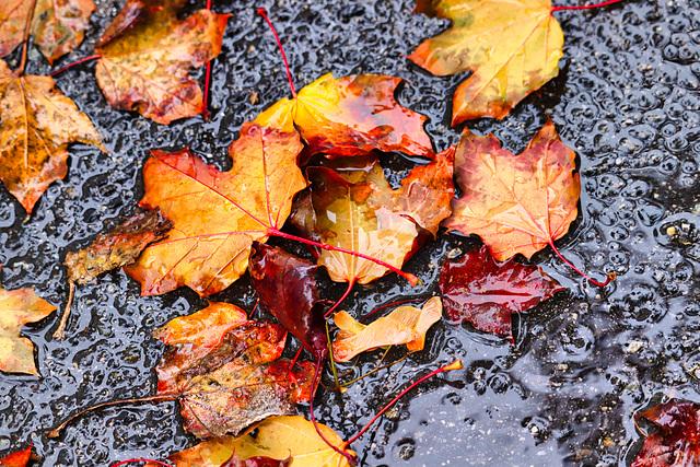 1 (11)...autumn herbst...rainy day
