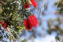 266/365 Bottle brush