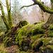 Dartmoor -  20160319