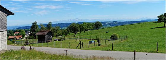 Ländliche Idylle bei Hohenrain-Wäldi mit dem Säntis und den Churfirsten