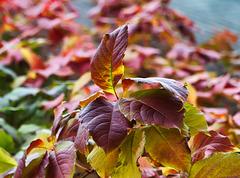 1 (9)...austria autumn herbst
