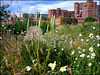 Wildflowers in the city