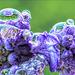 Wassertropfen auf Blau