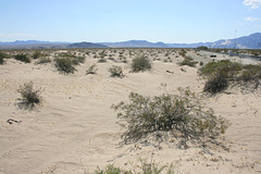 Crossing the Mojave--