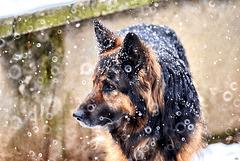 Ehhh sì, nevica sul serio ...