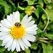 Daisy and Bug.