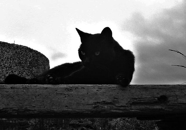 Cat on high