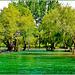 Alanya : le acque invadono i prati