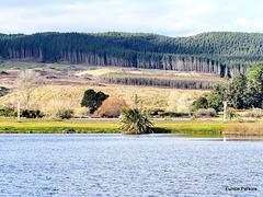 Across Lake Whakamaru.