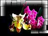 Des orchidées dans la maison ... quand ça veut bien (:o)) *** Orchids in the house... when possible (:o))