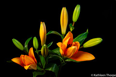 Lillies 052119