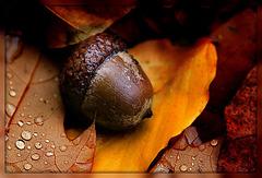 kleine Herbstwelt 4
