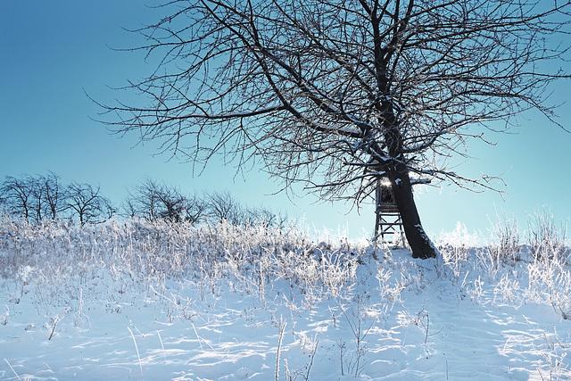 Eine Schneelandschaft im Gegenlicht - A snowy landscape in backlight