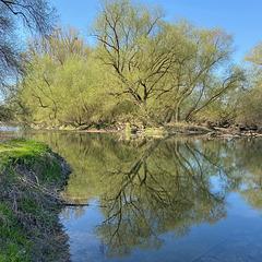 Frühling 2021 in des Rheinauen