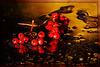 kleine Herbstwelt 6