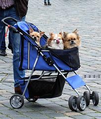 Zweckentfremdung - Hunde statt Kinder ;-)...