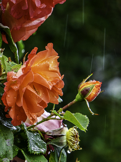 A rainy day today for H.A.N.W.E