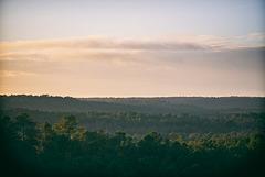 petit matin en forêt de Fontainebleau
