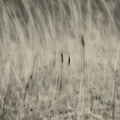 listening to a soft wind move through the tall grass