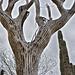 Saguaro Skeleton – Desert Botanical Garden, Papago Park, Phoenix, Arizona