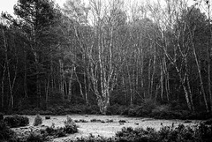ambiance polar en forêt