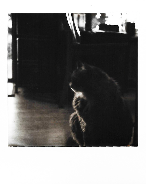 silhouette - kitty style