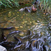 Fish feast in shallow water.