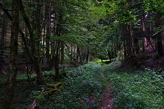Je fredonne , ce petit chemin qui sent la noisette ........
