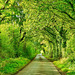 Leafy country lane