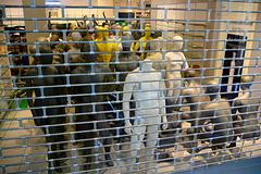 Captured dummies