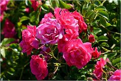 Un joli petit bouquet ... sur pied !