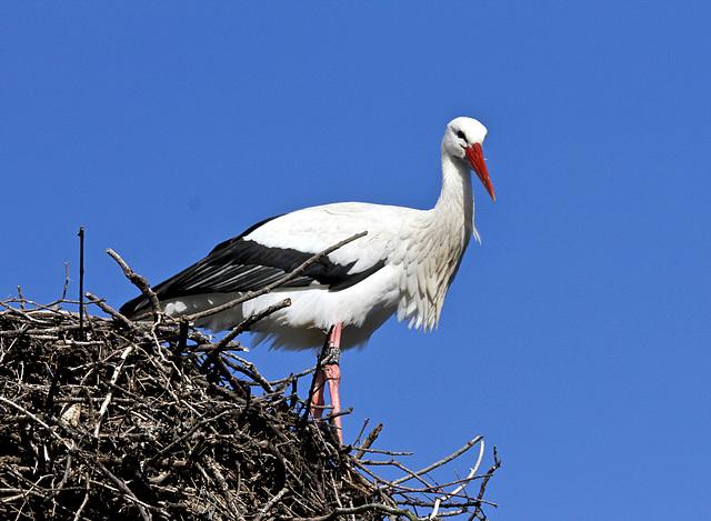 Schon beim Nestbau