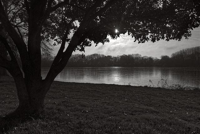 Par un matin froid au bord de l'étang.