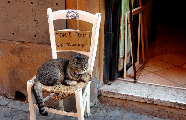 Rome is wonderfully feline , but...