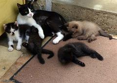 Les chatons de Nella .