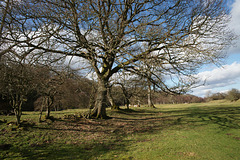 Lambley In Spring