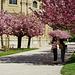 Hamani = Blüten betrachten, Looking at blossoms