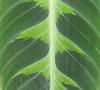 VERT ESPOIR / GREEN HOPE PATTERN