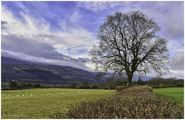 Crickhowell Tree