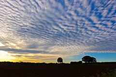 Evening mackerel sky